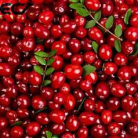 Cheap Anti Aging Organic Food Ingredients Freeze Dried Cranberry Powder Prevents Scurvy for sale