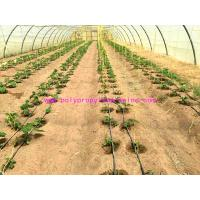 Quality 1g/m Stable Agricultural Tomato Tying Twine High Tenacity Different Colored wholesale