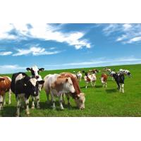 Enzyme preparation Complex Enzyme for Ruminant