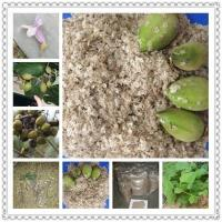 Quality Kiri seeds with phyto certificate wholesale