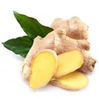 Quality Natural Essential Oil 【Product Name】Ginger Essential Oil wholesale